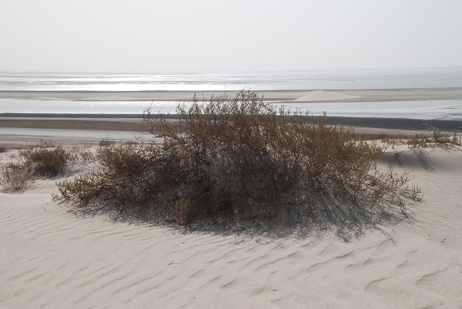 Qatar, 2009