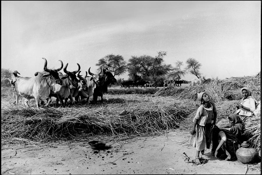 Winowing, Gujarat, 1978