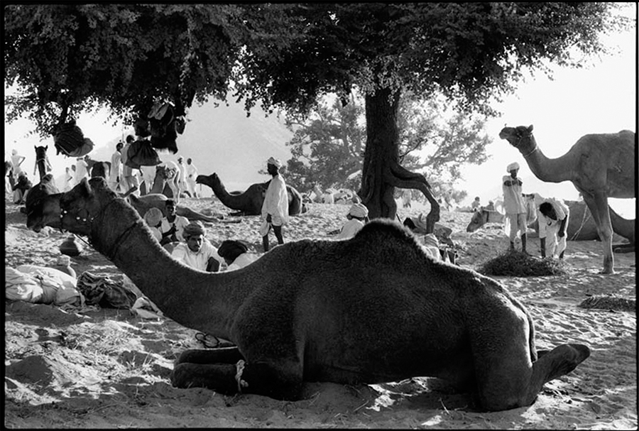 Pushkar fair, Rajasthan, 1974
