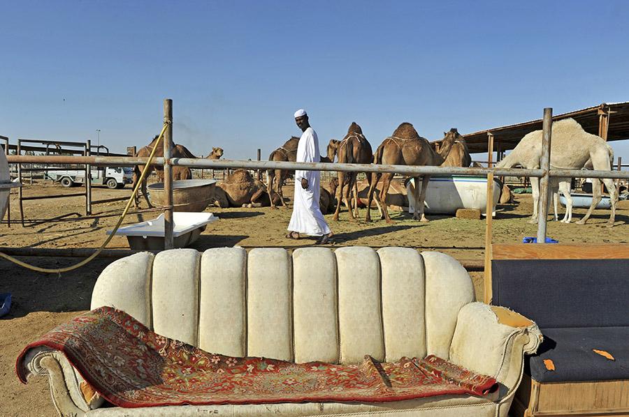 Camel market, Jeddah, Saudi Arabia, 2011